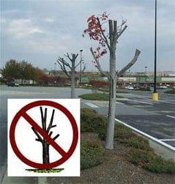 bomen toppen moet stoppen