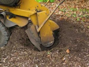 Stobbenfrezen is zonder meer de beste methode van boomstronk verwijderen.