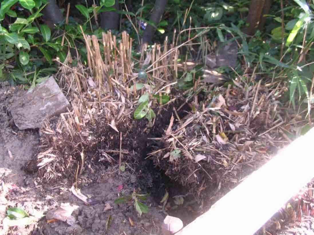 bamboe verwijderen met stronkenfrees
