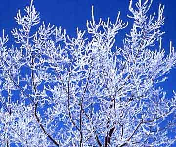 bomen kappen in de winter is goedkoper